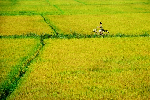 Lục bát mùa gieo-Thơ Bùi Xuân