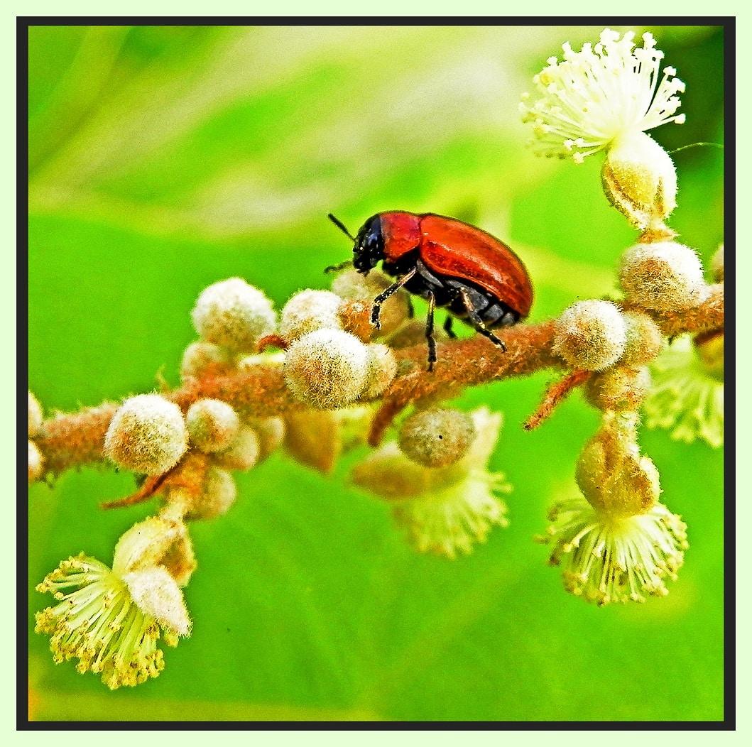 Hoa côn trùng