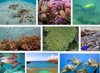 Đã xác định danh mục gần 12.000 loài sinh vật biển Việt Nam