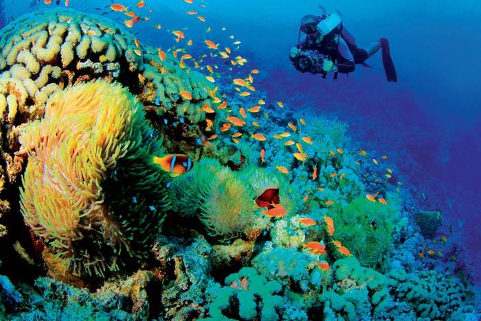 Đánh giá chính xác tổng trữ lượng nguồn lợi sinh vật biển Việt Nam