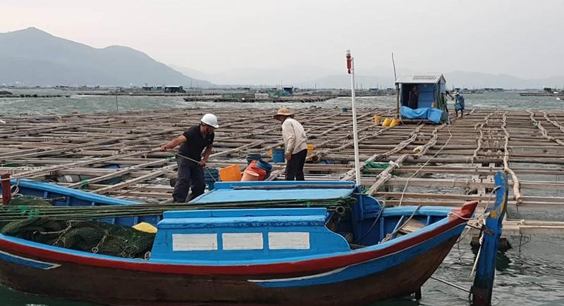Vận động người làm việc trên các bè nuôi thủy sản vào bờ tránh bão. Ảnh: TẤN LỘC