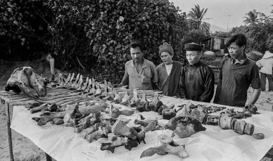 Cải táng cá Ông Vạn Tân Thái, phường Mân Thái, quận Sơn Trà, Đà Nẵng