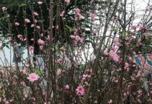 Giao thừa - Nhà thơ Trần Hồ Thúy Hằng - Hội viên Hội Nhà văn Đà Nẵng