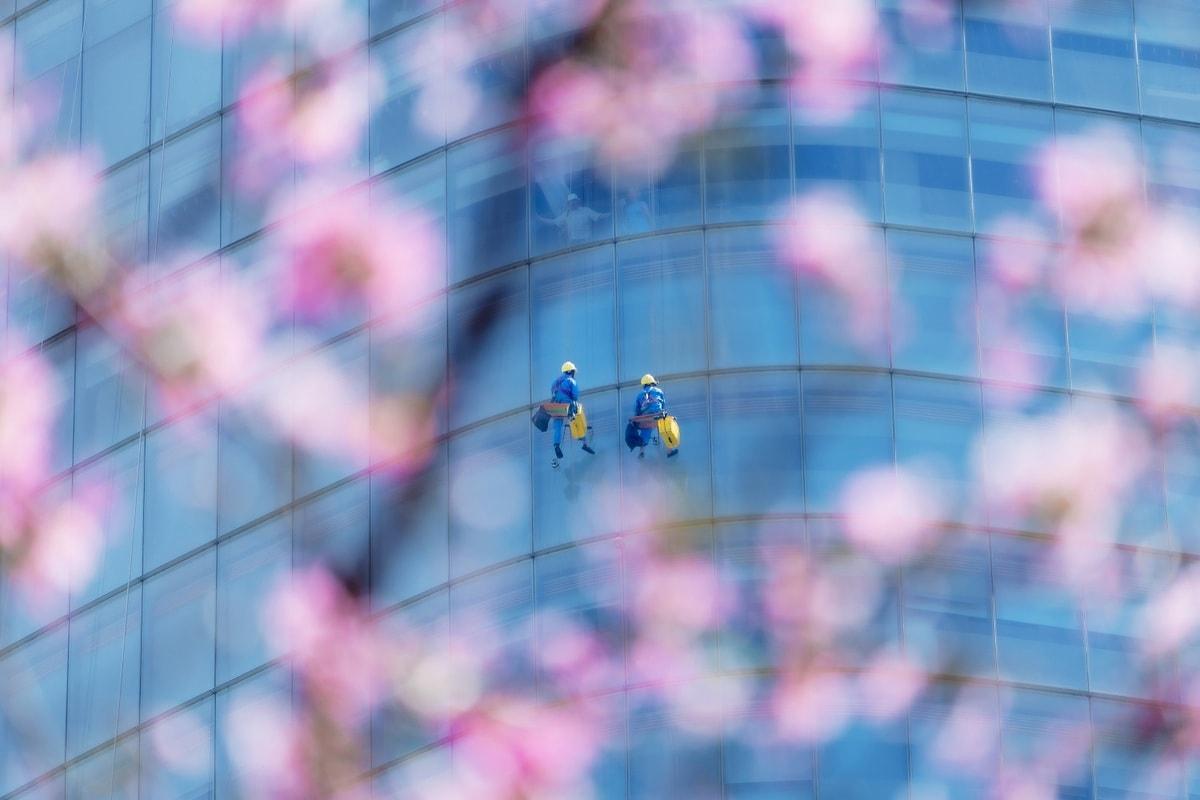 """Bức ảnh Làm việc trên cao, tác giả Cao Kỳ Nhân chụp tại TP HCM. Anh mô tả, hàng năm từ cuối tháng 2, những cây Kèn hồng tỏa sắc trên khắp thành phố nhộn nhịp. """"Nếu bỏ qua độ cao, thời tiết nóng bức mà những người công nhân đang đối diện, đây sẽ là khoảnh khắc tuyệt vời khi được chứng kiến công việc của họ từ những nhành hoa nở rộ"""", anh chia sẻ."""
