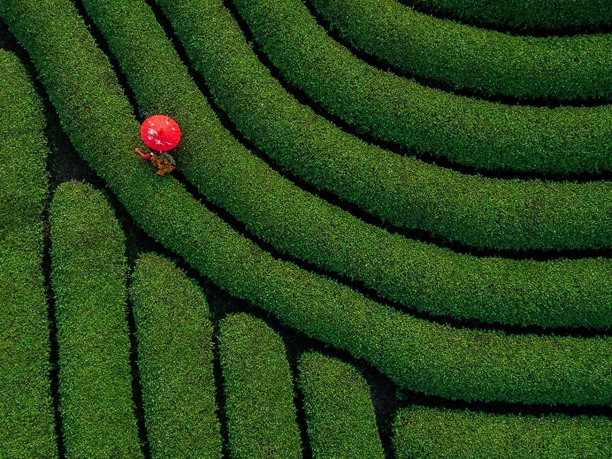 Góp mặt trong vòng chung kết còn có bức ảnh Chiếc ô đỏ của tác giả Phạm Ngọc Thạch, chụp tại đồi chè Mộc Châu, tỉnh Sơn La.