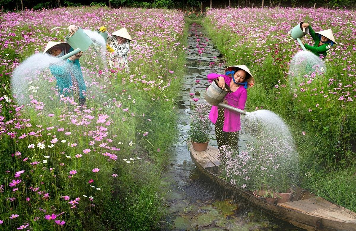 Bức ảnh Tưới hoa của tác giả Bùi Gia Phú, chụp tại thành phố Mỹ Tho, tỉnh Tiền Giang.