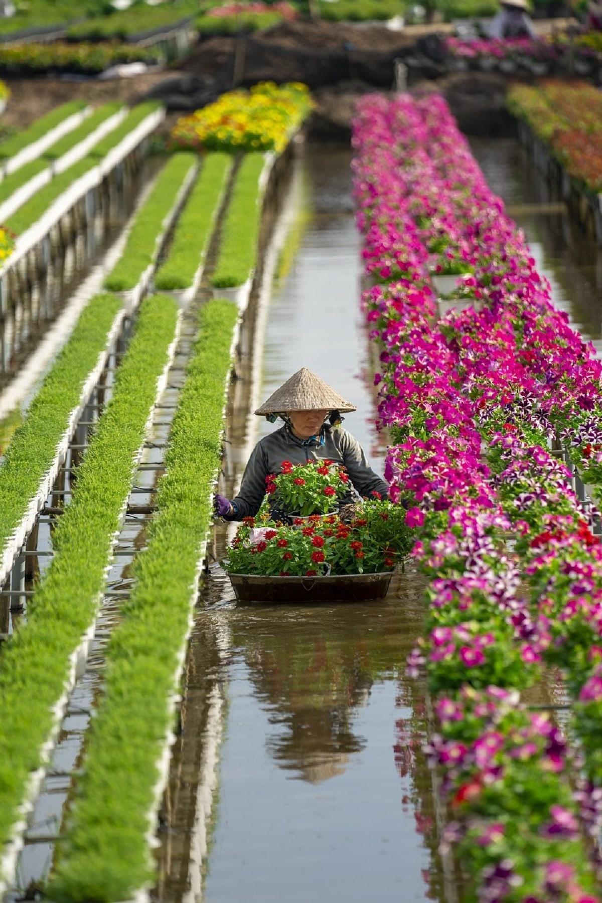 Tác phẩm Chăm sóc hoa của nhiếp ảnh gia Anh Trung, chụp tại thành phố Se Đéc. Anh mô tả, làng hoa Sa Đéc là nơi cung cấp số lượng lớn cây và hoa cho các tỉnh, thành miền Nam, đặc biệt là dịp Tết Nguyên Đán. Không giống với các trang trại nơi khác, hoa ở đây được trồng trên các giàn cao và tưới nước từ những con kênh gần đó.