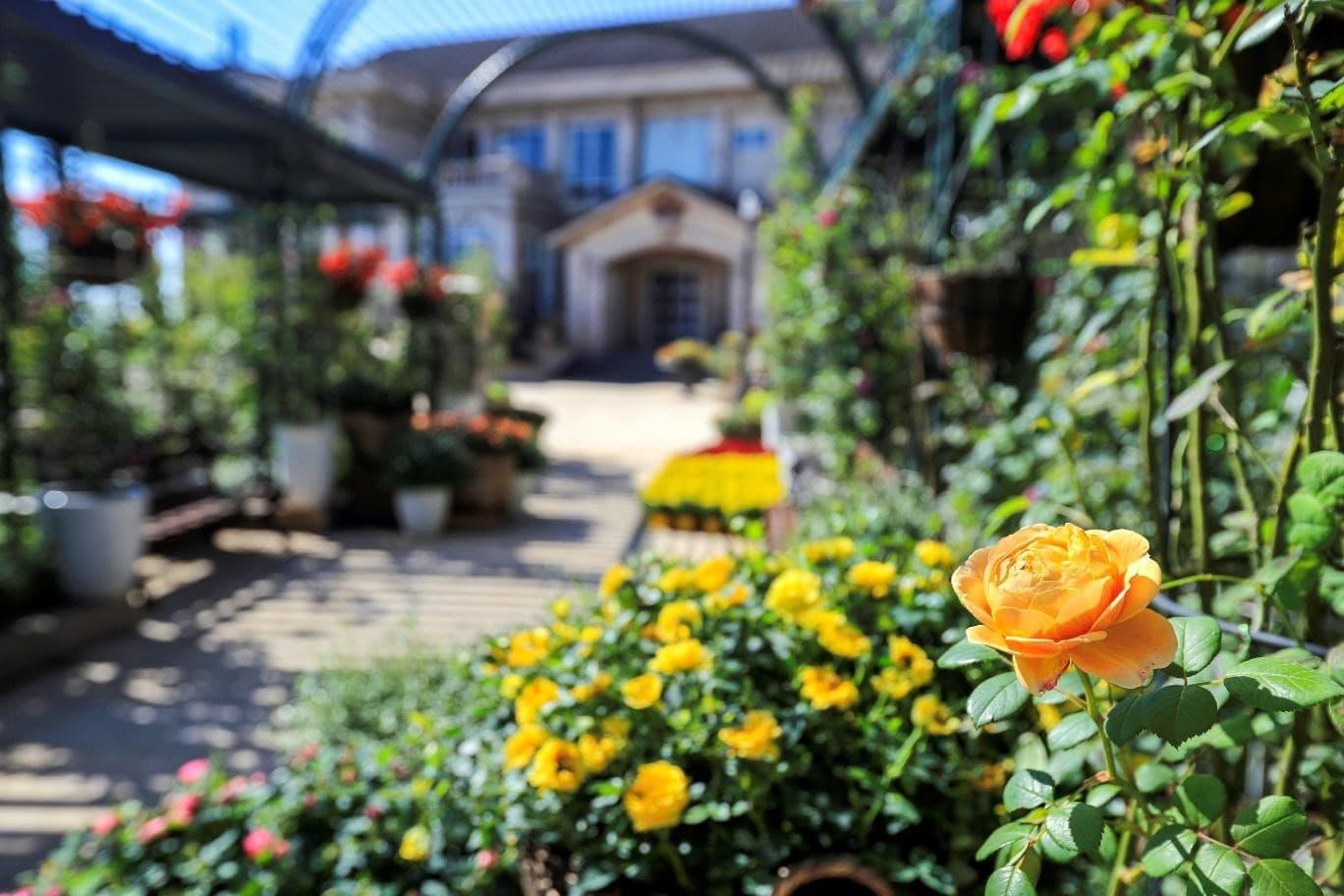 Vườn Hoa Le Jardin D'Amour là một thế giới nên thơ và ngập tràn hương sắc