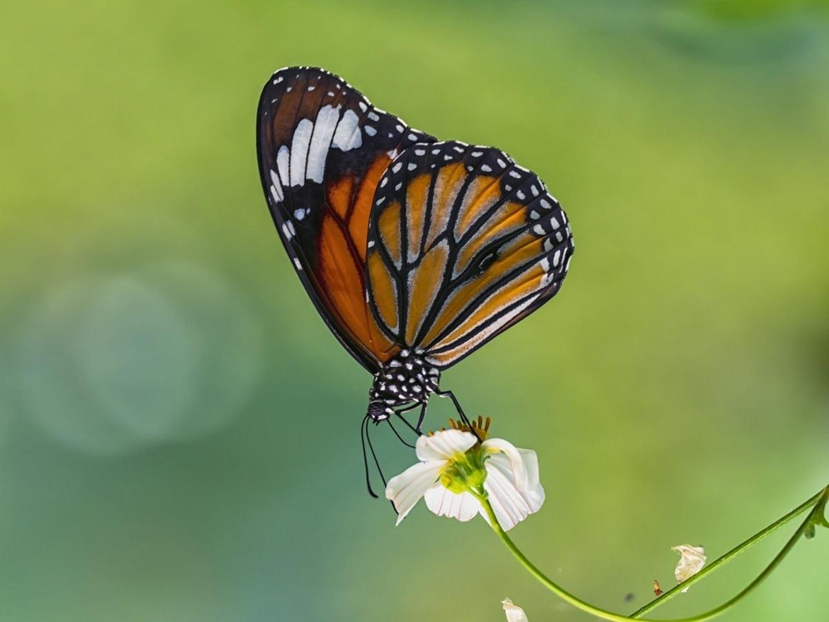 """Tác phẩm Mùa xuân của tác giả Nguyễn Ngọc Sơn. """"Tôi thích chụp về mẹ thiên nhiên, đặc biệt các loài chim và bươm bướm. Hoa là 'đồng minh' tốt nhất của tôi. Khi tôi nhận thấy những bông hoa đang nở, tôi chỉ cần chuẩn bị máy ảnh của mình và chờ đợi một con bướm đi qua"""", anh chia sẻ."""
