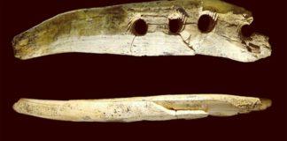 Công cụ 40.000 năm tuổi bằng ngà voi ma mút
