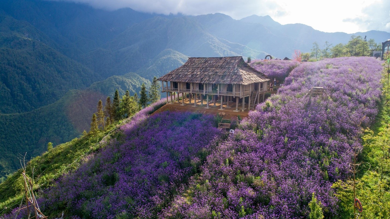 khi đi cáp treo lên đỉnh Fansipan để bái Phật cầu an hay chiêm ngưỡng vẻ đẹp hùng vỹ của núi rừng Hoàng Liên