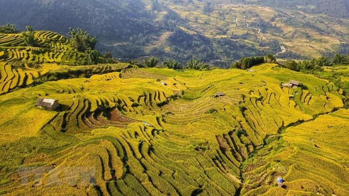 Những 'sóng lúa' từ sườn thung lũng xuống chân núi tạo nên bức tranh nên thơ. (Ảnh: Thành Đạt/TTXVN)