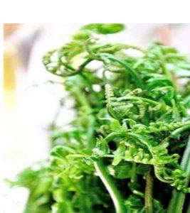 Rau dớn, trước hết là loài rau thích nghi với môi trường có độ ẩm cao, mọc tự nhiên nơi ven các con khe