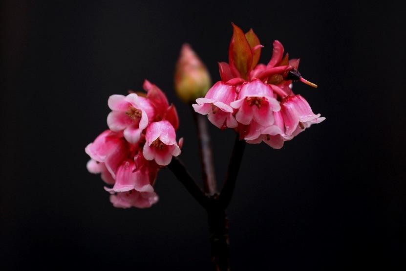 Bà Nà năm nay, ngoài mùa hoa đào chuông thanh tao, cũng rộn ràng một lễ hội mùa xuân với muôn sắc tulip, hướng dương rực rỡ cùng những show nghệ thuật độc đáo vốn đã làm nên bản sắc của khu du lịch suốt bao năm qua. Bởi thế nên, với nhiều du khách, Bà Nà Hills đã từ lâu là điểm hẹn du xuân phải đến mỗi dịp Tết về.