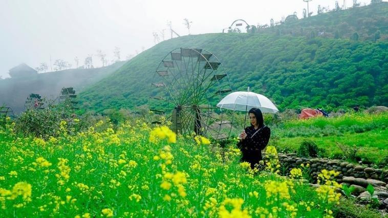 Hoa cải vàng, cải trắng, cải cúc, hoa xác pháo đỏ rực… phủ kín một sườn đồi, xa xa là cối xay gió đặc trưng miền Tây Bắc ẩn mình trong sương mờ đầy lãng mạn