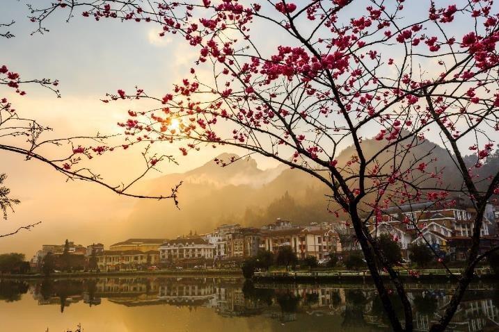Bên cạnh thiên đường anh đào Nhật Bản tại Sun World Fansipan Legend, hồ Mắt Ngọc ngay trung tâm thị trấn cũng đang được nhuộm hồng bởi rặng anh đào Nhật Bản đang bừng nở