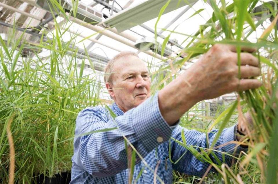 Giáo sư Edward Guinan nghiên cứu trồng các loại cây. Ảnh chụp màn hình